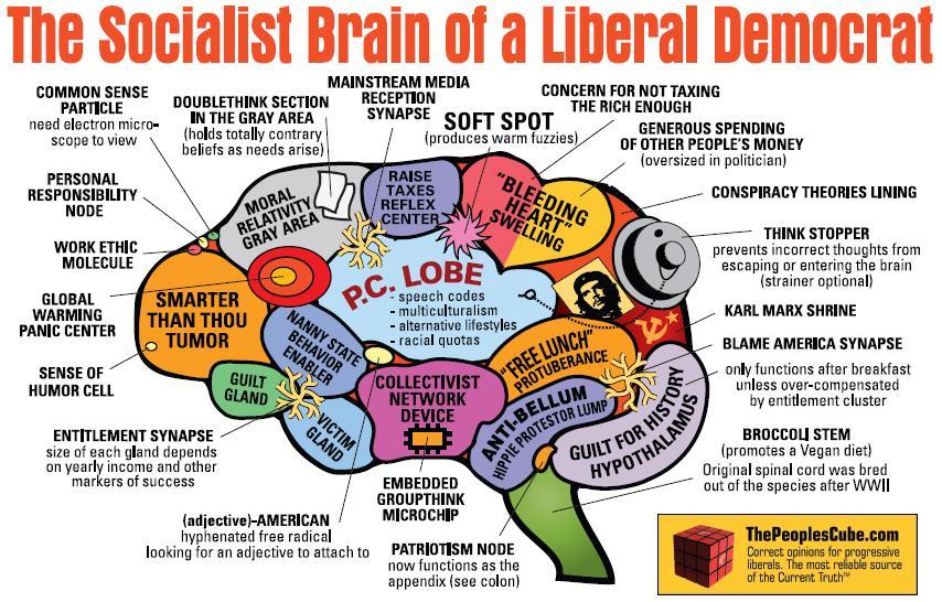 http://sallyoldcow.files.wordpress.com/2010/04/liberal-democrat-brain-2.jpg